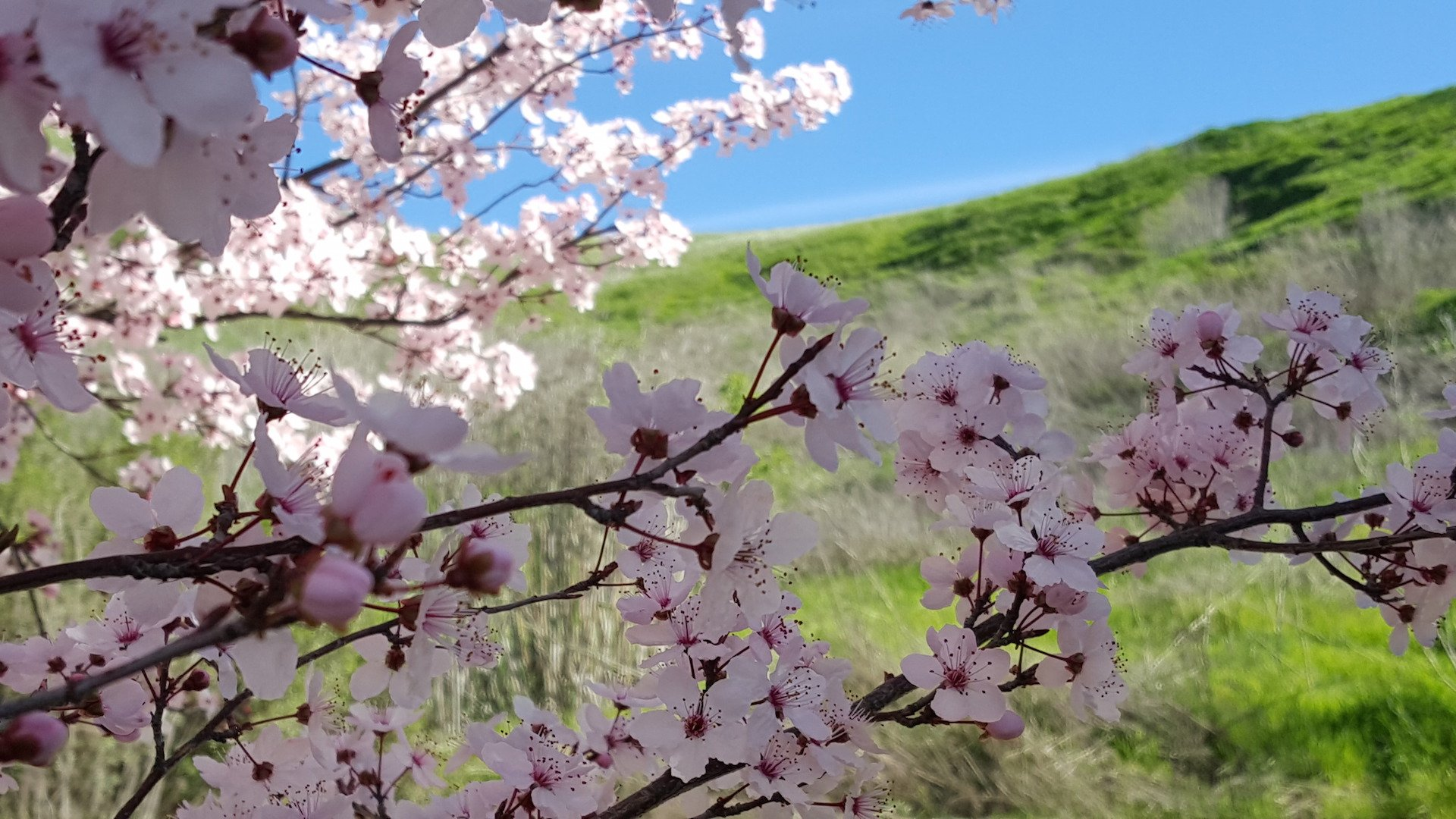 Vacaville is blooming with adventures for every traveler.