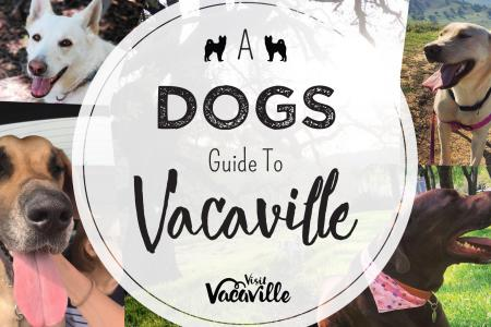 A dogs guide to vacaville